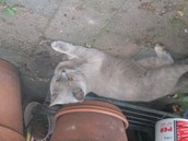 Dit is mijn kat