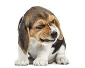 Wat moet je doen bij een agressieve puppy