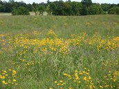 Prairie Planting - October 28