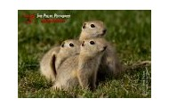Family of Gophers