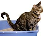 Kat met diarree of plasproblemen