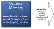 Sensory Memory