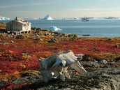 Greenland Tundra