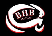 BHB Reptiles