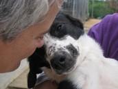 Curso Animal Communicator y conciencia animal