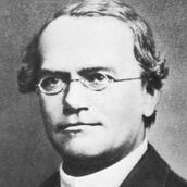 Gregor Mendel Facts:
