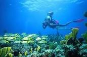 Scuba and Snorkeling