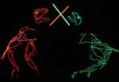 Dino-Light PAC Fieldtrip
