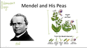 Mendel and his Peas Experiment
