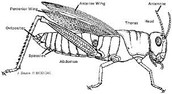Grasshopper Diagram