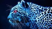 favorite animal