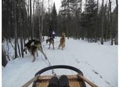 Traineau à chiens