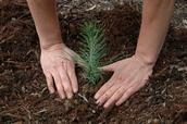 La Plantation D'arbres