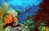 Investigating Great Barrier Reef
