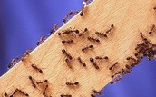 Ants Work A Lot