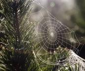 Cobwebs for Christmas