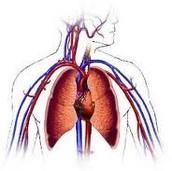 Cardiovascular technolgist