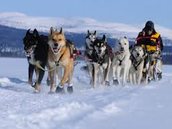 A musher with different breeds of dogs