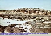 Stromatolites in Hamelin Pool