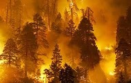 Climate change is making the world warmer and, in many places, dryer, setting the stage for increased forest fire activity across the country. In a new study, scientists with the U.S. Department of Agriculture's Forest Service say that the amount of land affected by forest fires in the U.S. is expected to increase by at least 50 percent but maybe as much as 100 percent by 2050—a doubling of burned area within less than 40 years.