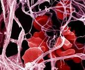 תאי דם...