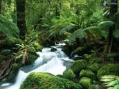Tropische regenwoud klimaat