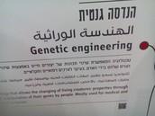 מתנסים בהנדסה גנטית