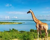 Uganda has beutiful animals