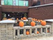 Pumpkins Galore in Front Garden!