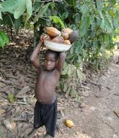 Children on the Cocoa Farm