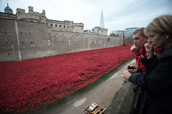 Stunning red poppy display on Remembrance Day