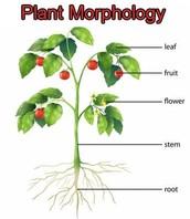 plant system