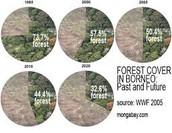 Forest cover in Borneo