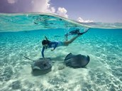 Tuesdays: GO snorkeling with nature