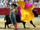 What happens to a bull if the bull slightly injures the matador?