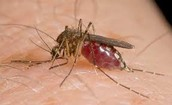 What is West Nile?