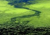 a algea river