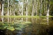 Death Swamp