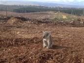 Wildlife affected