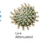 Live Attenuated and Subunit Vaccines