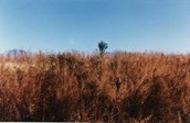 Picture of Grasslands.