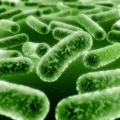 fangi and bacteria