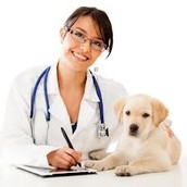 Basic Information About Veterinarians