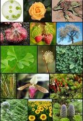 تعريف النباتات