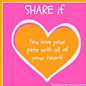Love Your Pets <3