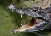 Killing Crocodiles