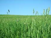 A Grassland's Culture and Population