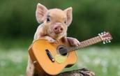 Barnyard Music