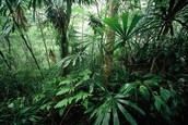 Vietnamese Jungle