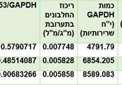 עוצמת הצבע השחור כומתה ובוטאה ביחידות שרירותיות. P53/GAPDH  ריכוז חלבון
